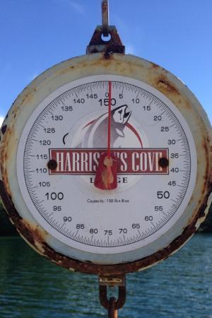 Barkley Sound, Kanada: Scale to weigh your catch
