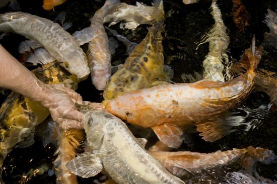 Grand Aquarium de Touraine: animation bassin tactile