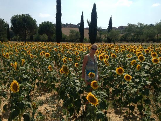 Castello di Saltemnano: sunflowers