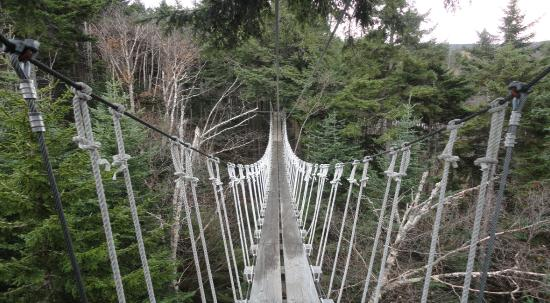 Bretton Woods Canopy Tour one of the canopy bridges & one of the canopy bridges - Picture of Bretton Woods Canopy Tour ...