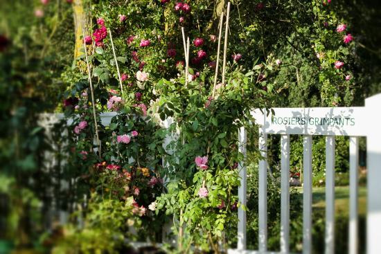 rosiers en pot sur la terrasse picture of les chemins de. Black Bedroom Furniture Sets. Home Design Ideas