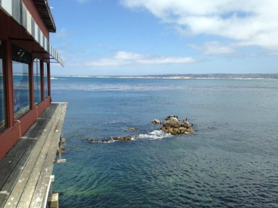 View of monterey bay from the fish hopper picture of for Fish hopper monterey
