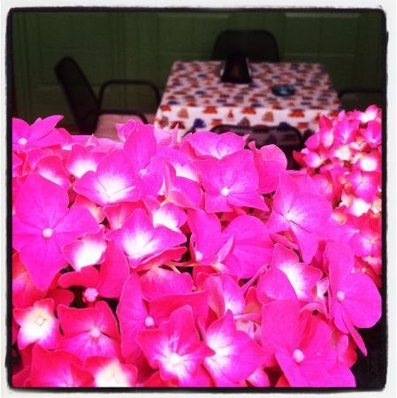 Le Lasse Cafe: Le nostre Ortensie nel mese di giugno :)
