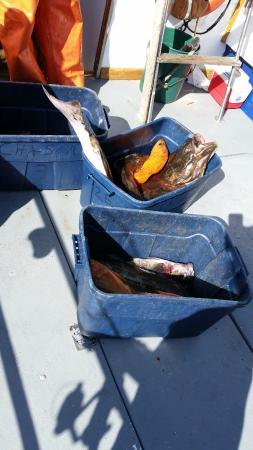 ดีโพเบย์, ออริกอน: tubs of fish!