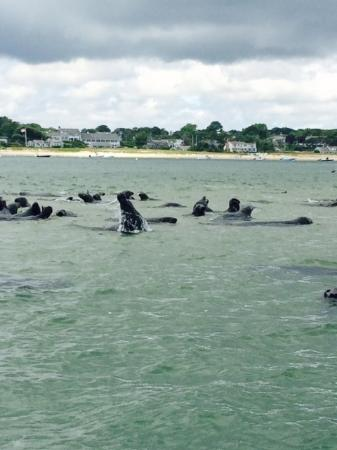 Blue Claw Boat Tours: seals