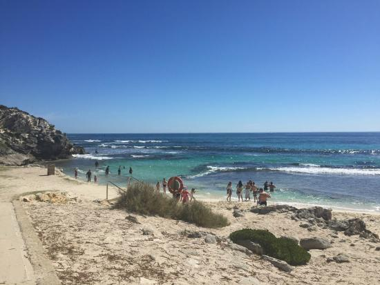 Parakeet Bay: Пляж