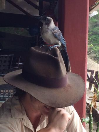 Rancho Cecilia Nicaragua: Our feathered friend at El Secreto
