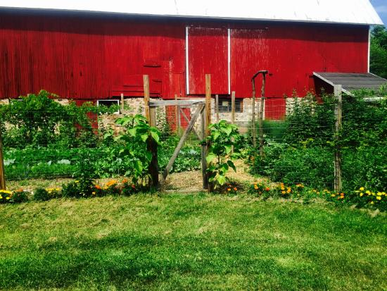 Crystal River Inn B&B, LLC: The Garden