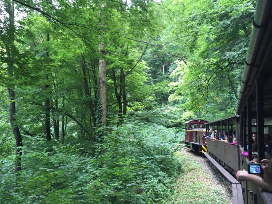 State Forest Railways of Lillafured: Train in forest