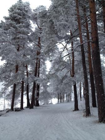 Vainolanniemi: Snowy Väinölänniemi