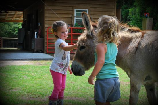 We Love This Farm Review Of Old Mcfaye S Farm Castle Hayne Nc Tripadvisor