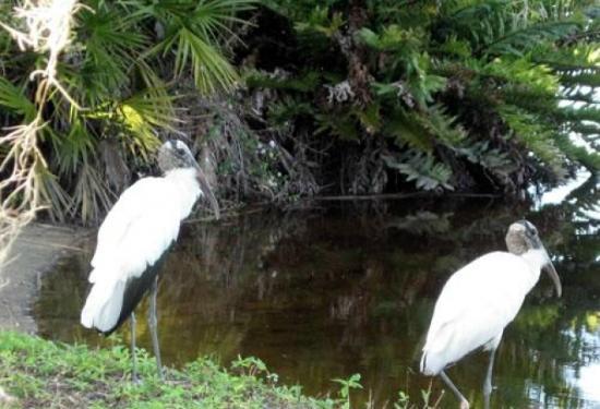 Ramblers Rest RV Campground: Nature