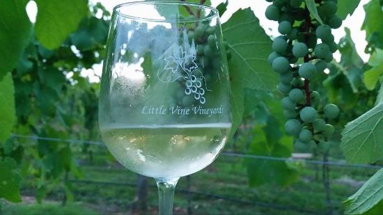 Little Vine Vineyards and Winery