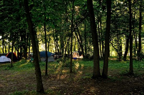 O'Connell's Yogi Bear Park: Tent campsites