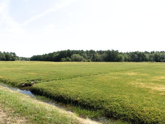 Cranberry separation process foto di flax pond farms for Koi pond traduzione