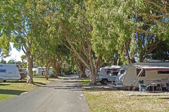 Kirra Beach Tourist Park Shady Caravan Sites
