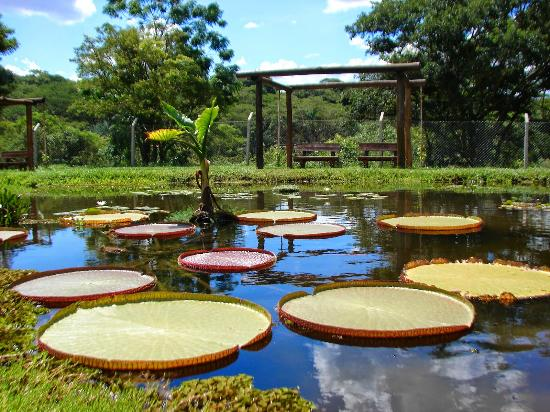 Municipal Botanical Garden of Bauru