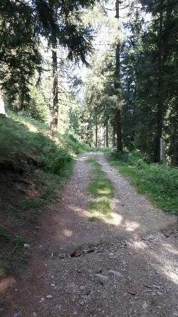 Sentiero del Bosco Incantato