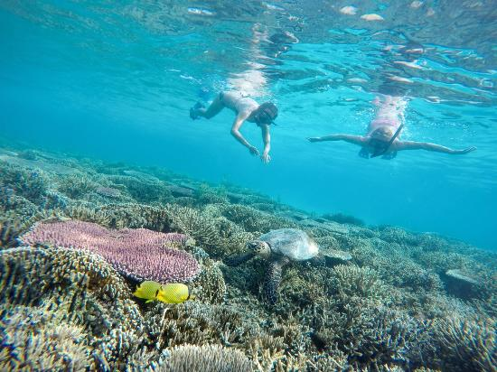 Snorkeling In Pink Beach Labuan Bajo Picture Of Komodo