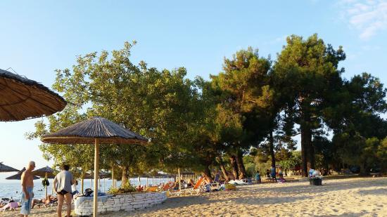 Pachis Beach: Plaj