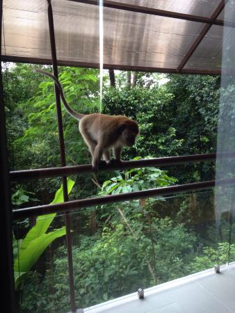 Amazing place to stay, with friendly neighbours (monkeys)