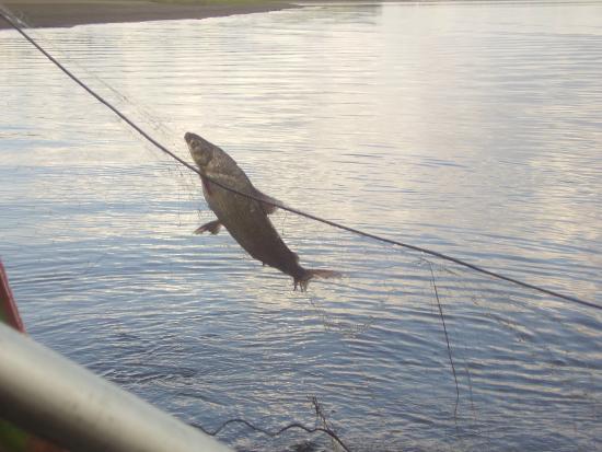 Seymchan, Russland: Рыбалка