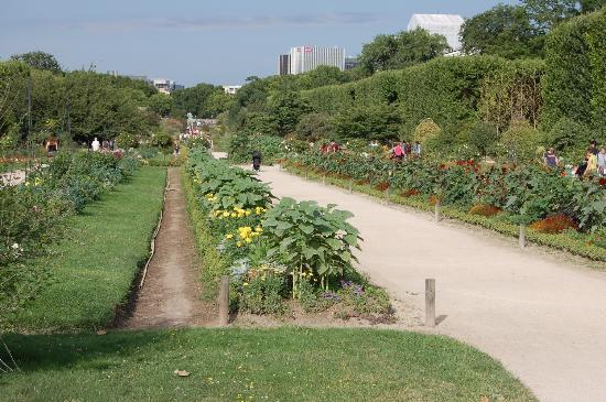 Les flamants roses picture of menagerie du jardin des - Menagerie du jardin des plantes paris ...