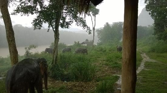 All Lao Elephant Camp - Day Tours: Loving the wet season!
