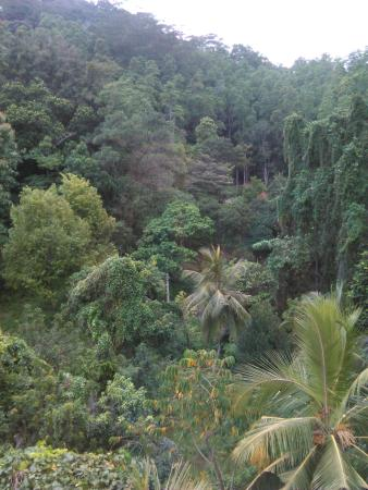 Kandy View Hotel: room with a view