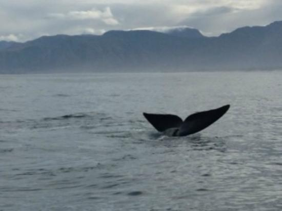Southern Right Charters: More right whale sightings
