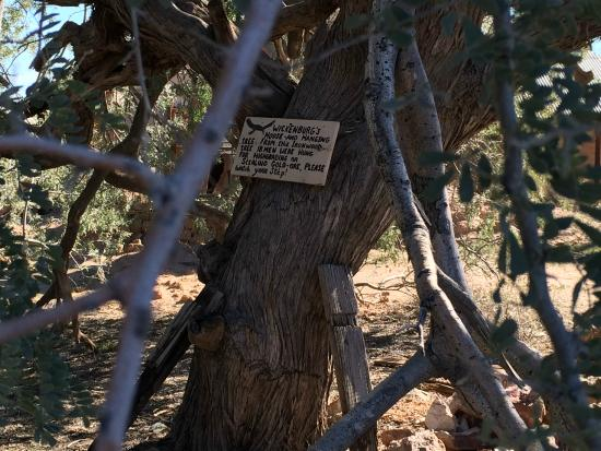 Vulture Mine Tours : Hanging Tree at Vulture Gold Mine