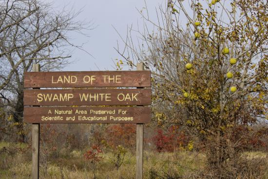 Swamp White Oak Preserve