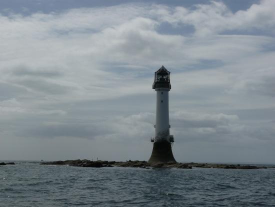 Arbroath Sea Safari: First class