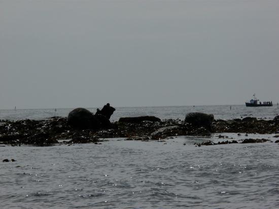 Arbroath Sea Safari: Seals