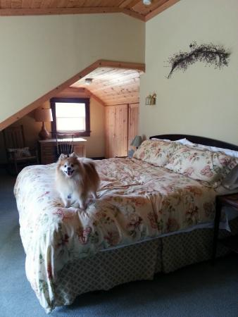 Barking Mad Farm & Country B&B: Treetops Suite - bed looks out onto the private balcony with mountain views