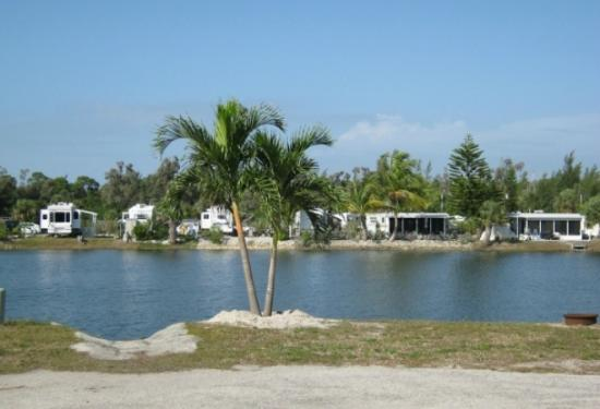 Koa Pine Island Reviews