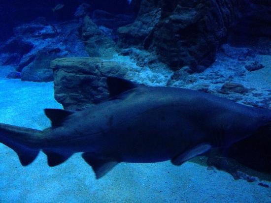 ... tropicaux - Photo de Aquarium Mare Nostrum, Montpellier - TripAdvisor