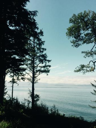 Point-No-Point Resort: Bald eagle (atop tree) and Orca whale, taken with iPhone  from the deck