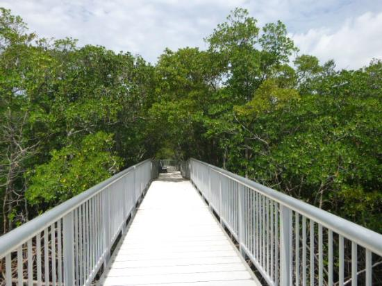 Mangrove Nature Park