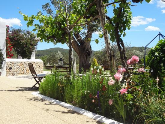 Sa Vinya D'En Palerm: jardín