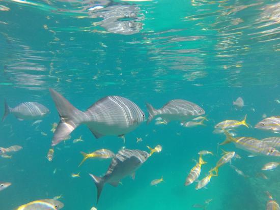 Starfish Snorkeling Gropro Pics