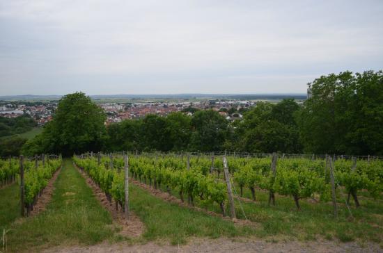 Vineyard walk from Hotel Jakob