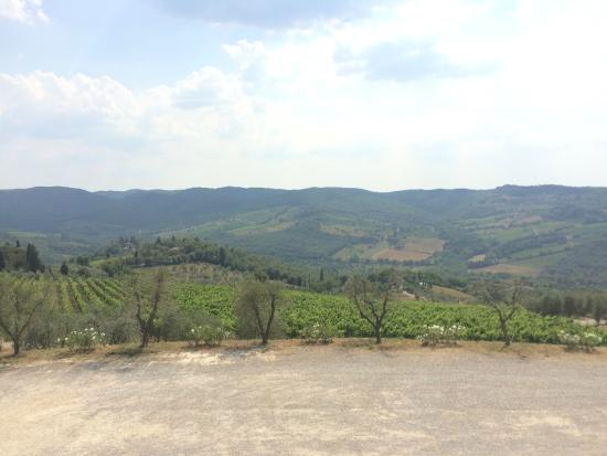 Fontodi Winery: View from parking area