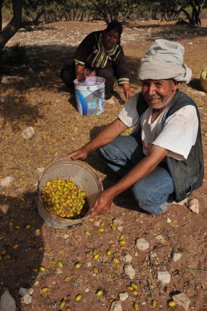 Riad Douar Des Oliviers : Omgeven door arganbomen