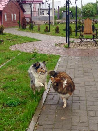 Rubtsovo, รัสเซีย: Территория напротив отеля
