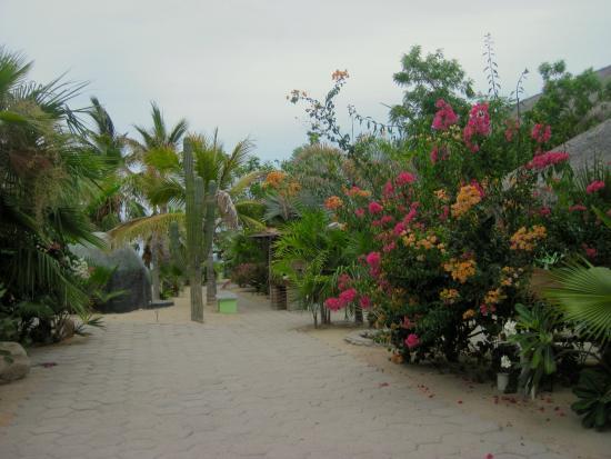 Casa Verde: The grounds