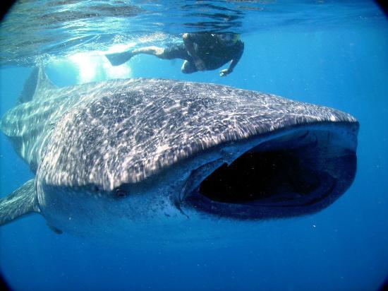 海洋观鲸鲨之旅