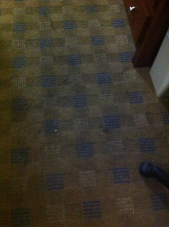 Culver City Travelodge: Nasty carpets. We would not step on them without shoes. (See dates on other pics) This is recent