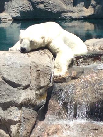 photo0.jpg - Picture of ABQ BioPark Zoo, Albuquerque ...