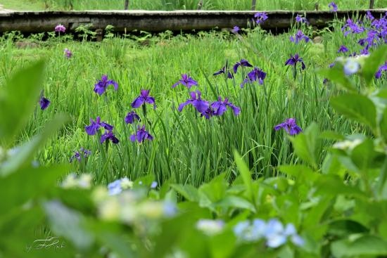Takidani Hanashobu Garden